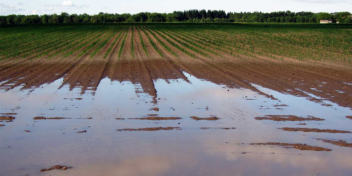 How to Groundwater Recharge and Irrigate Your Farm With One System